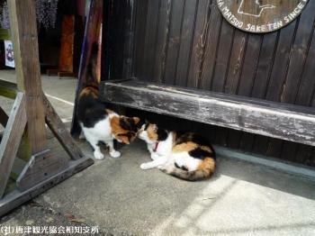 さよひめ茶屋(2009年4月22日)05