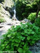 21.滝つぼ周辺 (2009年5月1日)01