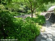 04.ホタル橋駐車場側(2009年5月11日)02