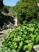 21.滝つぼ周辺(2009年5月11日)02