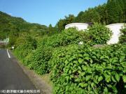01.ほたる橋駐車場(2009年5月18日)01