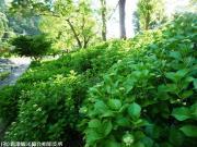 08.ほたる橋川向こう側(2009年5月18日)02