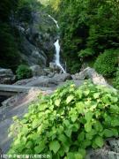 21.滝つぼ周辺(2009年5月18日)02