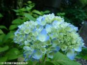 25.滝つぼ周辺(2009年5月18日)10