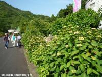 01.ほたる橋駐車場(2009年6月1日)01