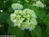 09.ほたる橋川向こう周辺(2009年6月1日)09