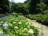 13.憩いの広場(2009年6月1日)01