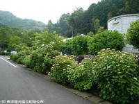 01.ほたる橋駐車場(2009年6月4日)01