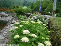 03.ほたる橋市道側(2009年6月4日)01
