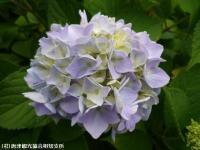 05.ほたる橋市道側(2009年6月4日)03