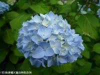 06.ほたる橋市道側(2009年6月4日)04