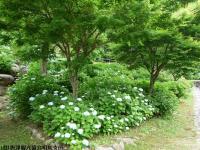 07.ほたる橋川向こう側(2009年6月4日)01