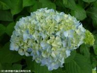 09.ほたる橋川向こう側(2009年6月4日)03