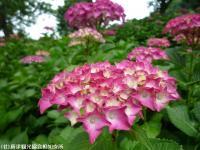 10.ほたる橋川向こう側(2009年6月4日)04