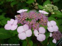 15.憩いの広場(2009年6月4日)03