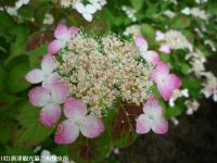 16.憩いの広場(2009年6月4日)04