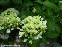 19.滝つぼ周辺(2009年6月4日)02