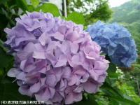23.おまけ(2009年6月4日)01