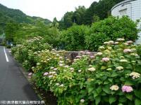 01.ほたる橋駐車場(2009年6月7日)01