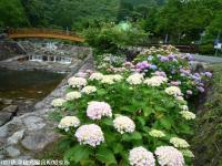 03.ほたる橋市道側(2009年6月7日)01