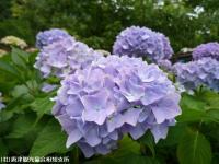 05.ほたる橋市道側(2009年6月7日)03