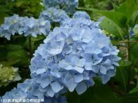06.ほたる橋市道側(2009年6月7日)04