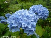 09.ほたる橋川向こう側(2009年6月7日)03