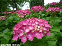 10.ほたる橋川向こう側(2009年6月7日)04