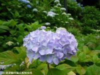15.憩いの広場(2009年6月7日)03