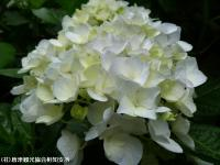 19.滝つぼ周辺(2009年6月7日)03