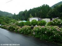 01.ほたる橋駐車場(2009年6月10日)01