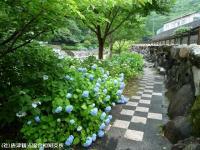 04.ほたる橋市道側(2009年6月10日)02