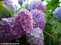 05.ほたる橋市道側(2009年6月10日)03