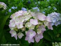 15.憩いの広場(2009年6月10日)03