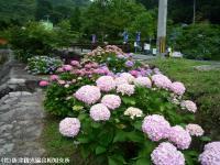 03.ほたる橋市道側(2009年6月12日)01