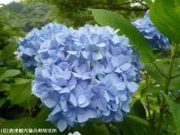 06.ほたる橋市道側(2009年6月12日)04
