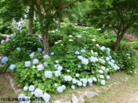 07.ほたる橋川向こう側(2009年6月12日)01