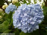 09.ほたる橋川向こう側(2009年6月12日)03