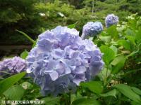 12.遊歩道入り口(2009年6月12日)02