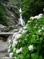 18.滝周辺(2009年6月12日)02