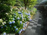 04.ほたる橋市道側(2009年6月18日)02