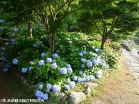 07.ほたる橋川向こう側(2009年6月18日)01