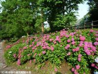 08.ほたる橋川向こう側(2009年6月18日)02