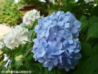 09.ほたる橋川向こう側(2009年6月18日)03