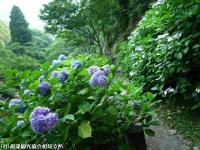 11.遊歩道入り口(2009年6月18日)01