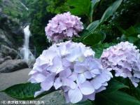 19.滝つぼ周辺(2009年6月18日)02