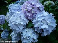 20.滝つぼ周辺(2009年6月18日)03