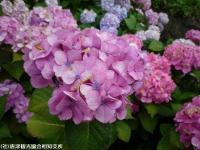 05.ほたる橋市道側(2009年6月22日)03