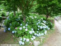 07.ほたる橋川向こう側(2009年6月22日)05
