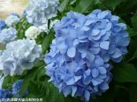 09.ほたる橋川向こう側(2009年6月22日)07